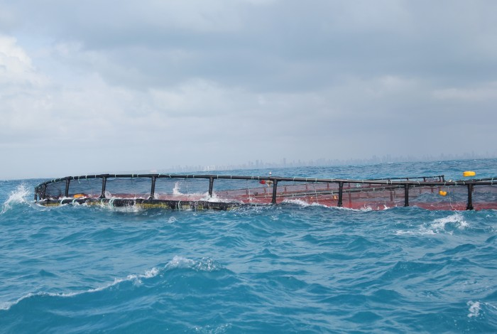 A cage used for aquaculture.www.mermaidproject.eu